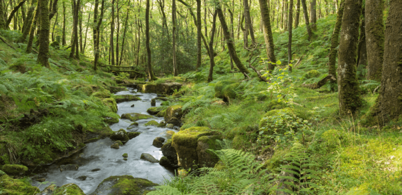Umwelt_Wald